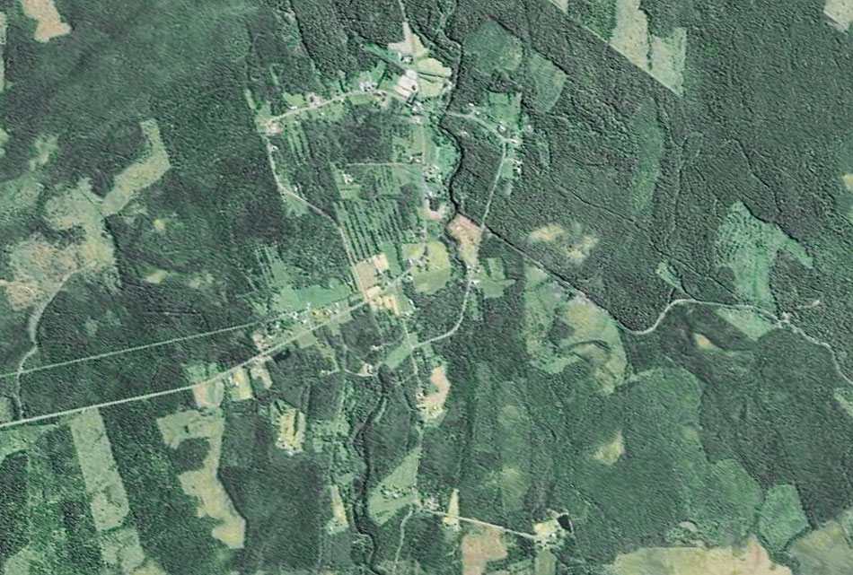 Satellit_Skog